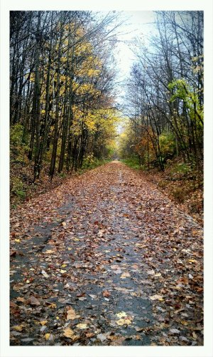 Railroad trail in the fall