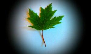 Nature walk leaf identification.
