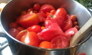 Tomatoes ready to be made into sauce