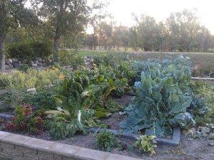 Last of the Garden