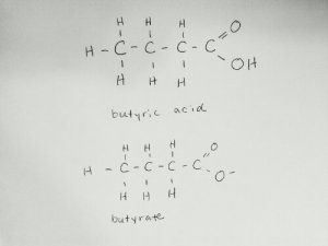 Structure of butyrate