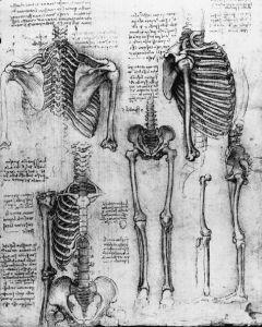 leonardo_skeleton_1511